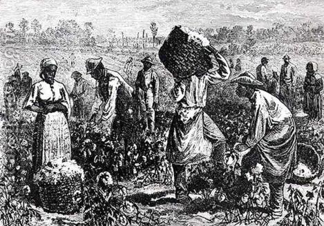 esclavos-negros-del-algodon